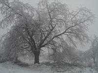 Ľadová kalamita v roku 2001